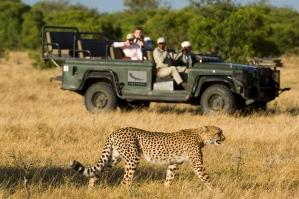 Big Cat Safari 1