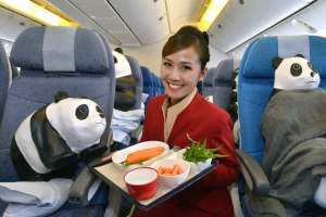 Pandas inside CX - cabin crew 2