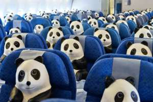 Pandas inside CX economy cabin